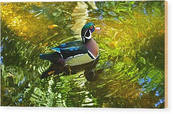 Wood Duck In Lights Wood Print