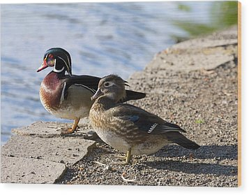 Wood Duck Pair By The Lake Wood Print by David Gn