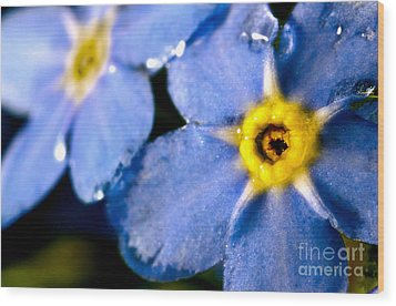 Wood Forget Me Not Blue Two Wood Print by Ryan Kelly