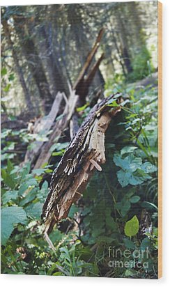 Wood In The Forest Wood Print by Janie Johnson