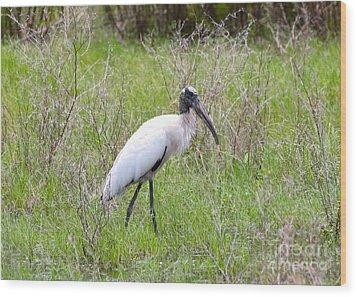 Wood Stork In The Marsh Wood Print