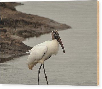 Wood Stork Walking Wood Print by Al Powell Photography USA