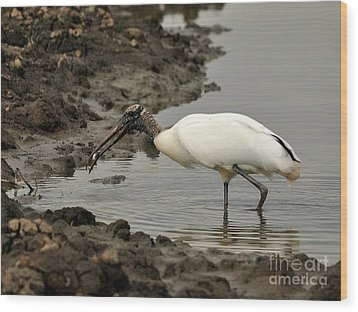 Wood Stork With Fish Wood Print by Al Powell Photography USA