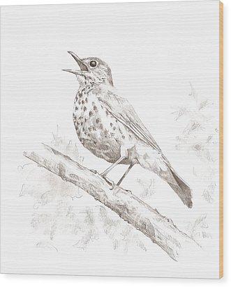 Wood Thrush Wood Print