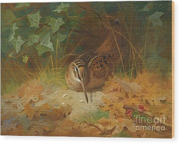 Woodcock Wood Print by Celestial Images