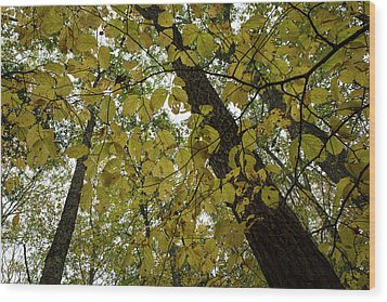 Wood Print featuring the photograph Woodland Canopy by Andrew Pacheco