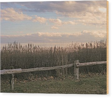 Woodland Fences - Marshes Of Fairfield County Ct Wood Print by Margie Avellino