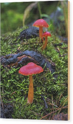 Wood Print featuring the photograph Woodland Floor Decor by Bill Pevlor