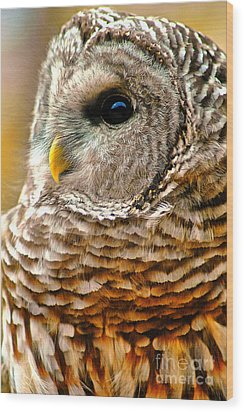 Woodland Owl Wood Print by Adam Olsen