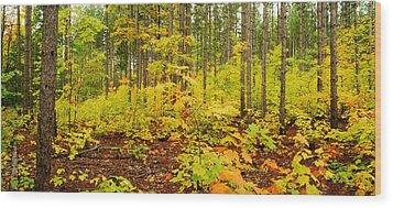 Woodland Panorama Wood Print by Michael Peychich