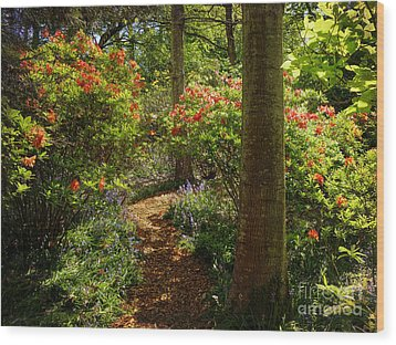 Woodland Path With Rhododendrons Wood Print