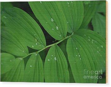 Woodland Rain Wood Print
