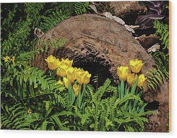 Wood Print featuring the photograph Woodland Tulip Garden by Tom Mc Nemar