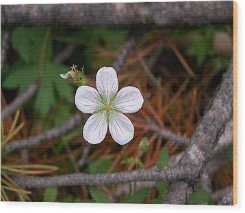 Woodland Wildflower Wood Print