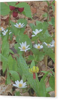 Woodland Wildflowers Wood Print by John Burk