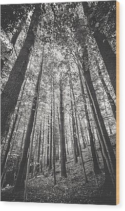 Wood Print featuring the photograph Woodlands by Robert Clifford