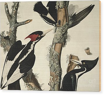Woodpecker Wood Print by John James Audubon