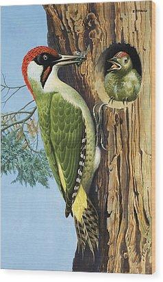 Woodpecker Wood Print by RB Davis