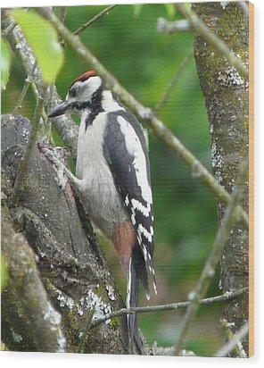 Woodpecker Wood Print by Valerie Ornstein