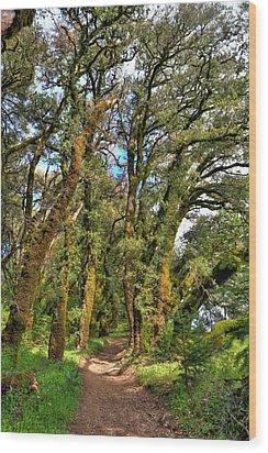 Woodsy Trail Wood Print by Paul Owen