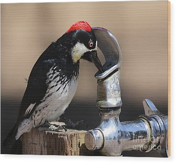 Woody And The Water Fountain Wood Print by Wingsdomain Art and Photography