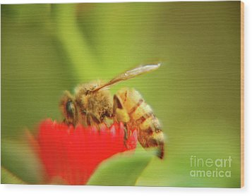 Wood Print featuring the photograph Worker Bee by Micah May