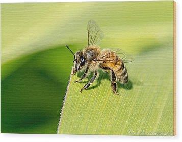 Worker Bee Wood Print