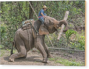Wood Print featuring the photograph Working Elephant by Wade Aiken