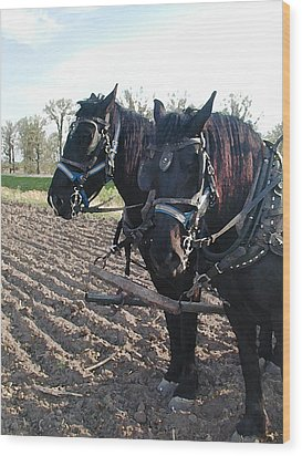 Working Percherons Wood Print by Laurie With