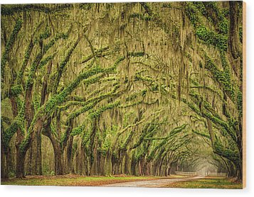 Wormsloe Drive Wood Print by Phyllis Peterson