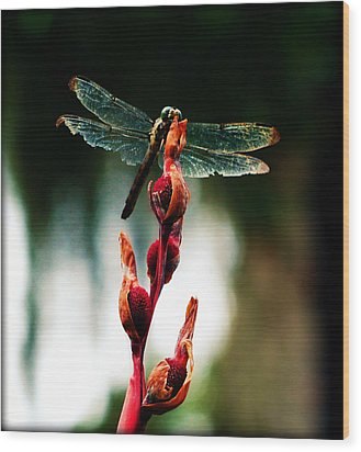 Wornout Dragonfly Wood Print