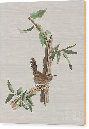 Wren Wood Print by John James Audubon
