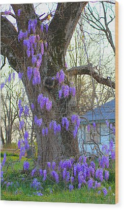 Wysteria Tree Wood Print