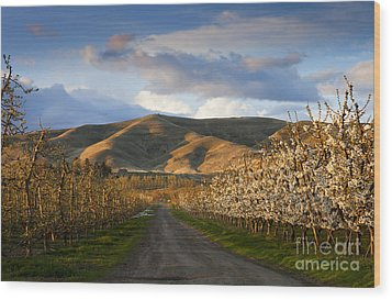Yakima Valley Spring Wood Print by Mike  Dawson