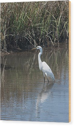 Yawkey Wildlife Refuge - Great White Egret II Wood Print by Suzanne Gaff