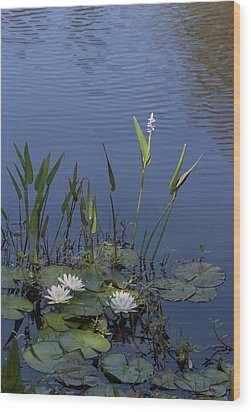Yawkey Wildlife Reguge Water Lilies With Rare Plant Wood Print by Suzanne Gaff