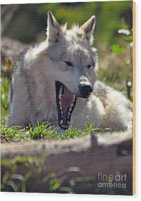 Yawn Wood Print by Diane E Berry