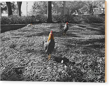 Wood Print featuring the photograph Ybor Cocks by Blake Yeager