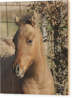 Wood Print featuring the photograph Yearling by Rick Friedle