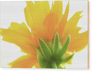 Wood Print featuring the photograph Yellow And Green by Roger Mullenhour