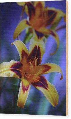 Yellow And Orange And Garnet Daylilies 1270 H_2 Wood Print