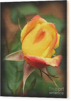 Yellow And Orange Rosebud Wood Print