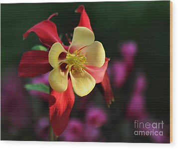 Yellow And Red Columbine Wood Print by Kenny Glotfelty