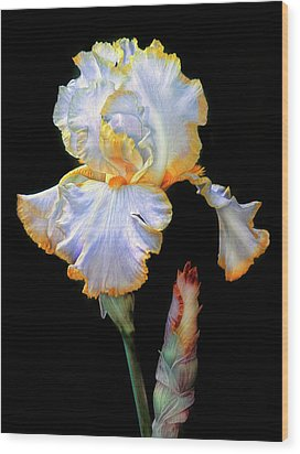 Yellow And White Iris Wood Print by Dave Mills