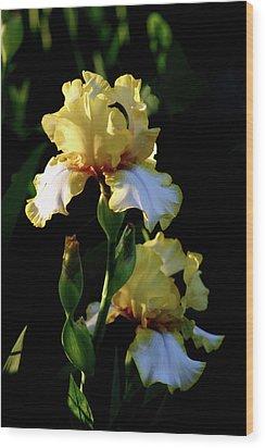 Yellow And White Irises 6681 H_2 Wood Print
