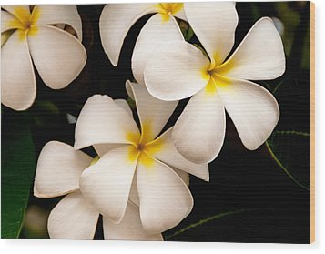 Yellow And White Plumeria Wood Print by Brian Harig