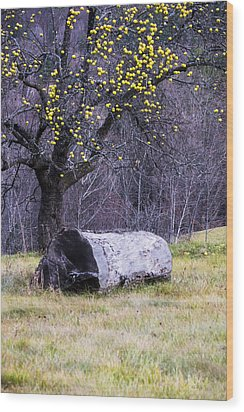 Yellow Apples Wood Print