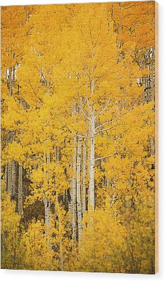 Yellow Aspens Wood Print by Ron Dahlquist - Printscapes