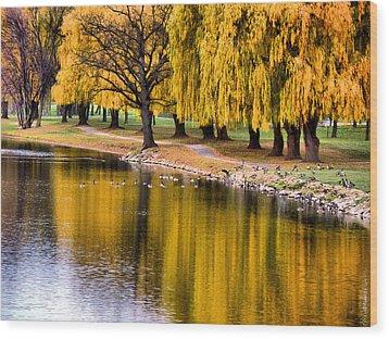 Yellow Autumn Wood Print by Scott Hovind