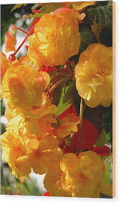 Yellow Begonia Flowers.  Victoria Wood Print by Darlyne A. Murawski